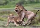 Love fighting